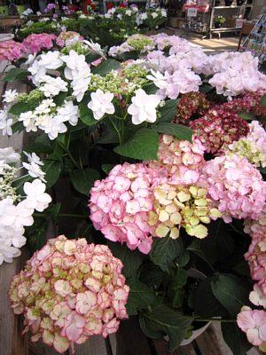 初夏を感じる花_c0141652_18381642.jpg