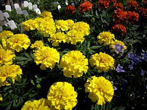 初夏を感じる花_c0141652_18383234.jpg