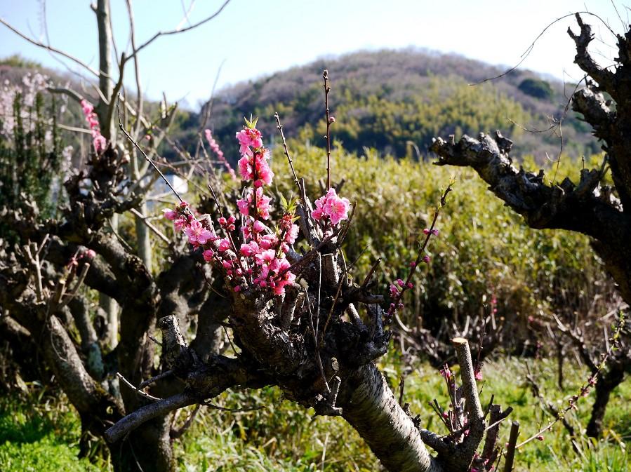 里山の風景_b0093754_15324126.jpg