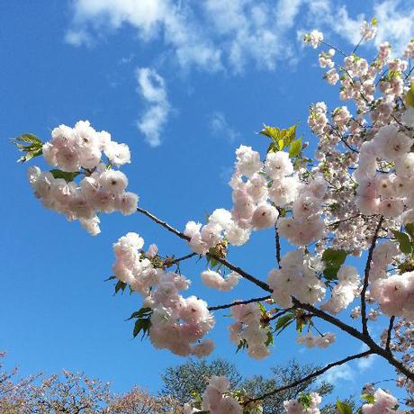 2013 春のピンホール写真撮影会 新宿御苑_f0117059_202383.jpg