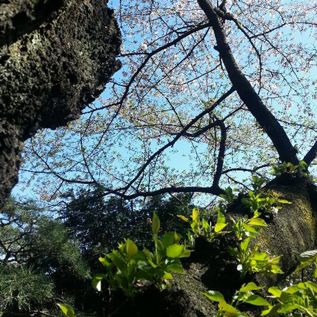 2013 春のピンホール写真撮影会 新宿御苑_f0117059_2024382.jpg