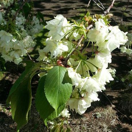 2013 春のピンホール写真撮影会 新宿御苑_f0117059_2032981.jpg
