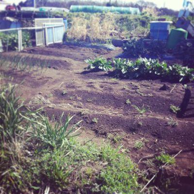 畑はじめました_a0259565_1857298.jpg