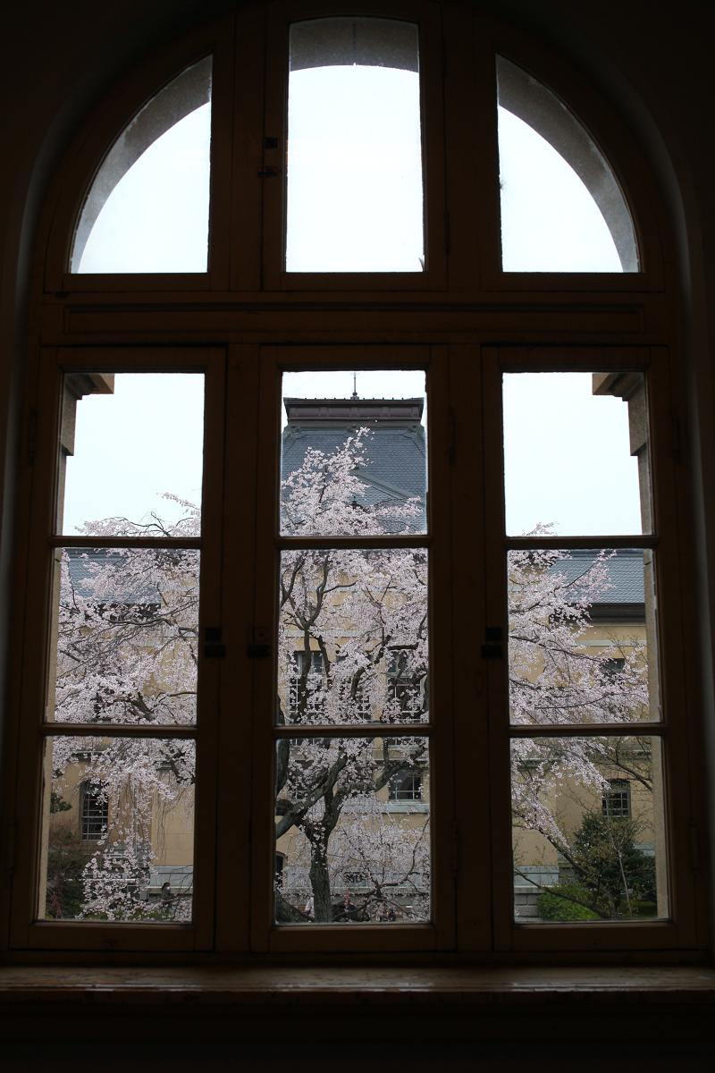 桜 2013 <京都 京都府庁>  _f0021869_23561028.jpg