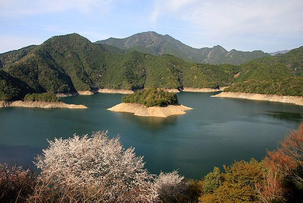 下北山の桜_b0186680_10425998.jpg