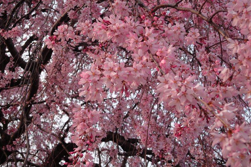 早すぎた春_e0105782_0272411.jpg