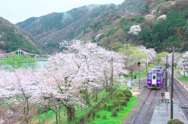 桜とJR笠置駅_f0266284_1632235.jpg
