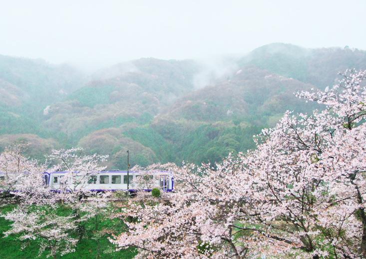 桜とJR笠置駅_f0266284_16364721.jpg