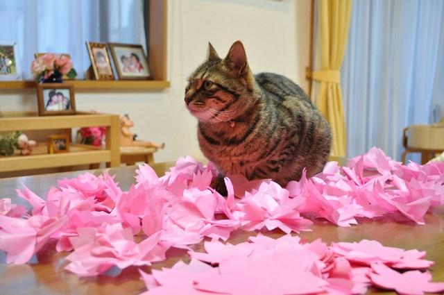 猫たちのお花見_a0126590_22162363.jpg