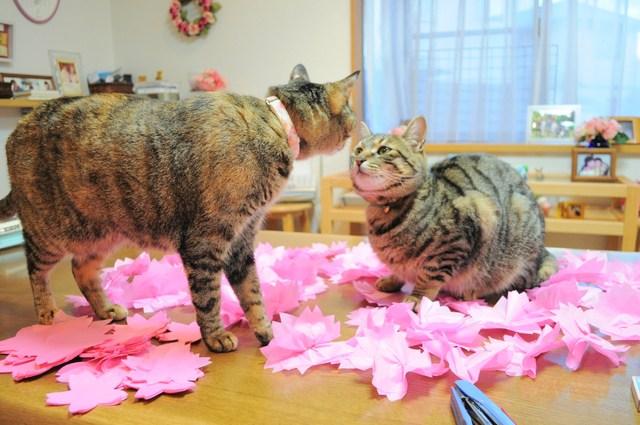 猫たちのお花見_a0126590_2218414.jpg