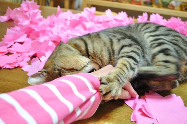 猫たちのお花見_a0126590_22212936.jpg