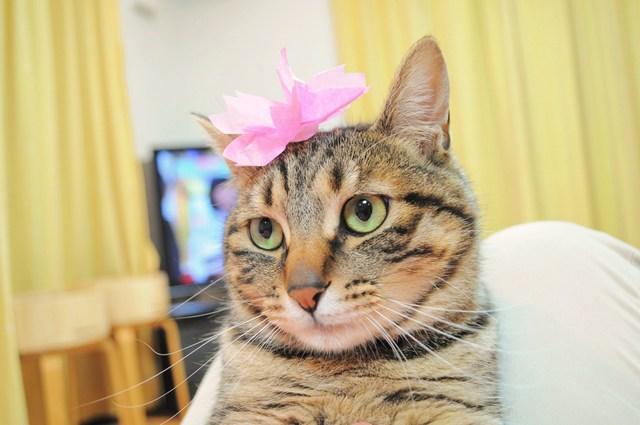 猫たちのお花見_a0126590_22241362.jpg