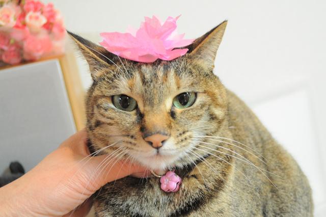 猫たちのお花見_a0126590_22255551.jpg