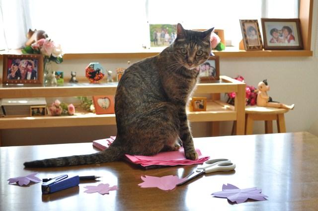 猫たちのお花見_a0126590_2273717.jpg