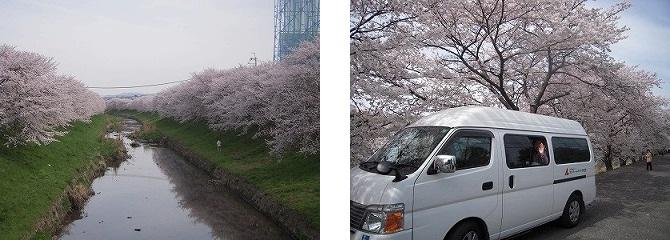 「お花見」<エスティームライフ学園前>_c0107602_1043480.jpg