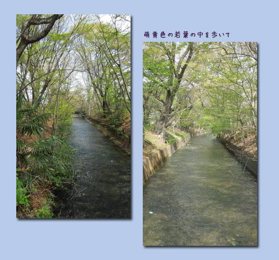 玉川上水ウォーキング (1回目)_c0051105_0315164.jpg