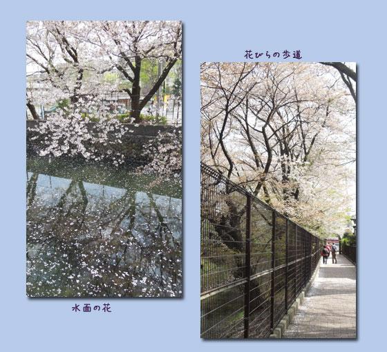 玉川上水ウォーキング (1回目)_c0051105_044374.jpg