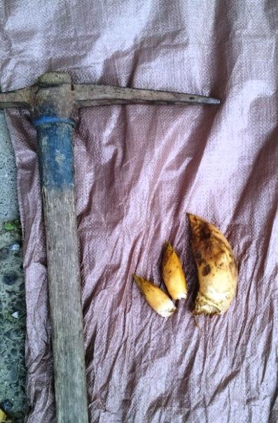 旬の恵み ~竹の子狩り~_f0163105_19484936.jpg