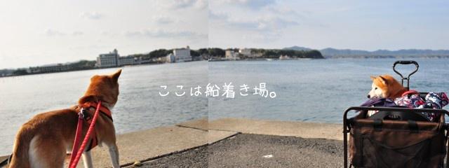 清水の舞台から飛び降りろ!@わんこと伊勢・志摩_e0005411_1151242.jpg