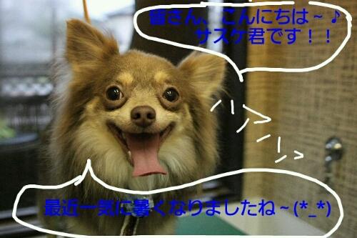こんばんは~♪♪_b0130018_2144584.jpg