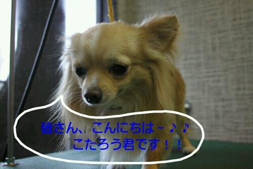 b0130018_22181233.jpg
