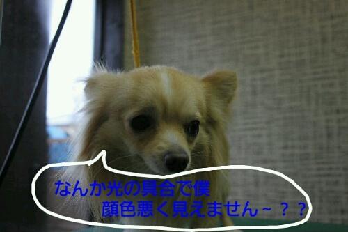 b0130018_22191421.jpg