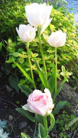 お花祭り_d0085018_22154426.jpg