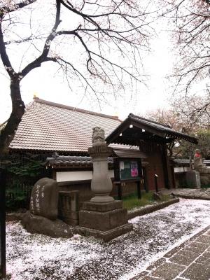 今年も楽しませていただきました、満開の鬱金(ウコン)桜_e0010418_14192695.jpg