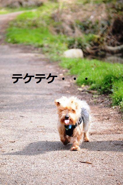 セロリのニンニク黒胡椒胡麻和え_d0104926_4291595.jpg