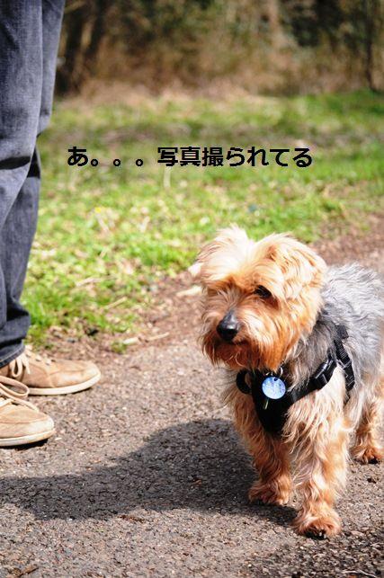 セロリのニンニク黒胡椒胡麻和え_d0104926_4295195.jpg
