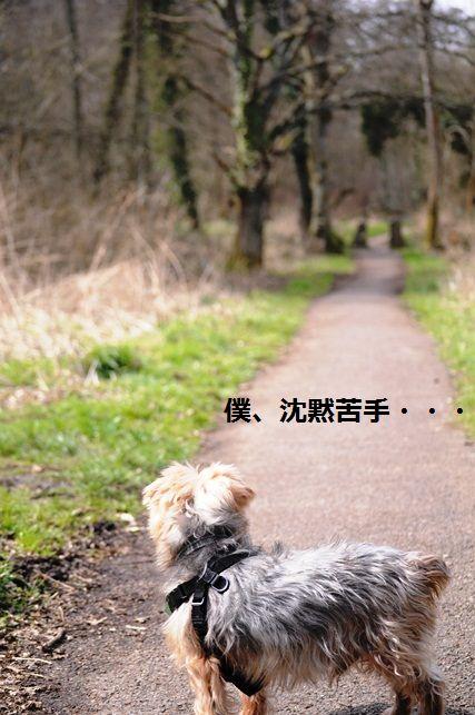 セロリのニンニク黒胡椒胡麻和え_d0104926_430325.jpg