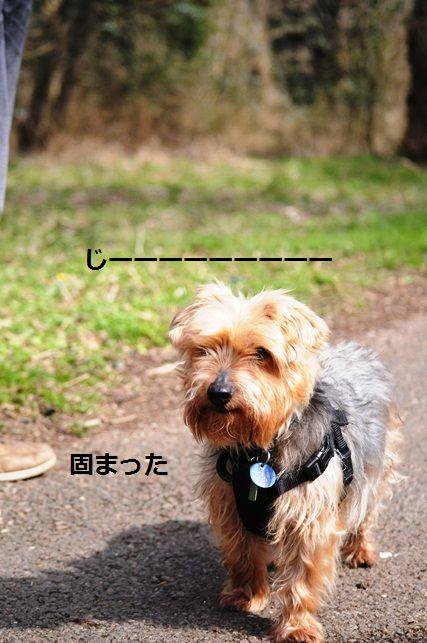 セロリのニンニク黒胡椒胡麻和え_d0104926_430419.jpg