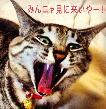 demi:y&chiku-chikuイベントのお知らせ♡_b0035734_17355896.jpg