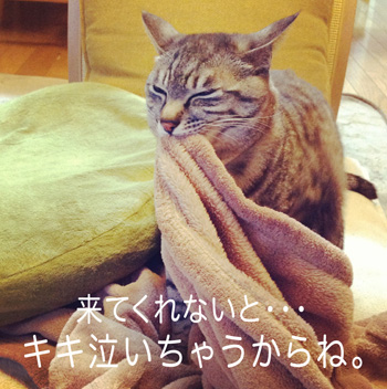 demi:y&chiku-chikuイベントのお知らせ♡_b0035734_17491790.jpg