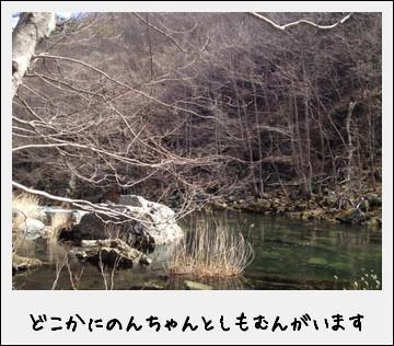 春の安家川で渓流釣りに釣戦!したのだ♪_c0259934_1502355.jpg