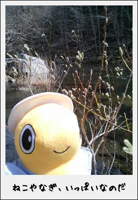 春の安家川で渓流釣りに釣戦!したのだ♪_c0259934_15211887.jpg