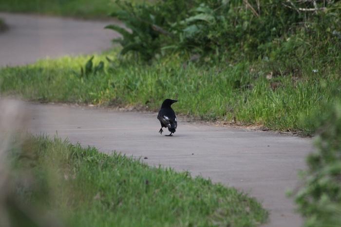 2013.4.8 馬入ふれあい公園・地味な鳥たち_c0269342_2352499.jpg