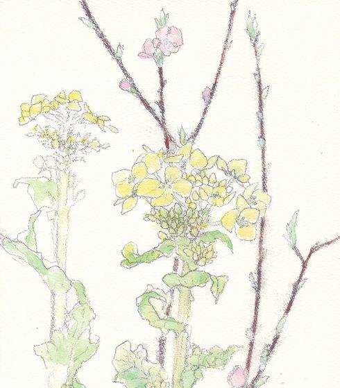 春の花・日本画教室モチーフあれこれ_c0160745_17421027.jpg