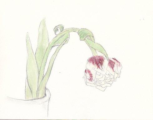 春の花・日本画教室モチーフあれこれ_c0160745_17425190.jpg