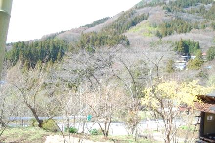 桜はいつ開花?_d0249047_1671212.jpg