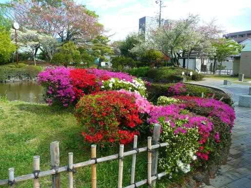 日曜閑話 桜からツツジへ_c0087349_3504061.jpg
