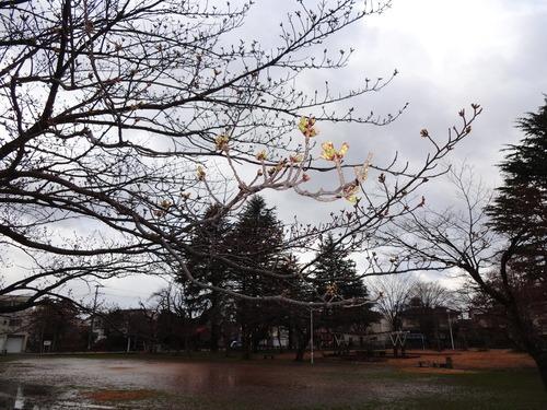 春の嵐 ~爆弾低気圧~_e0266363_10172748.jpg
