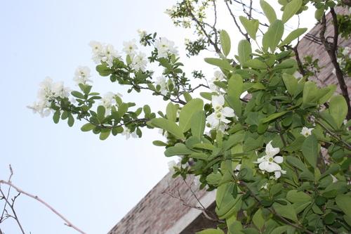 花と緑とともに_d0237564_14562737.jpg