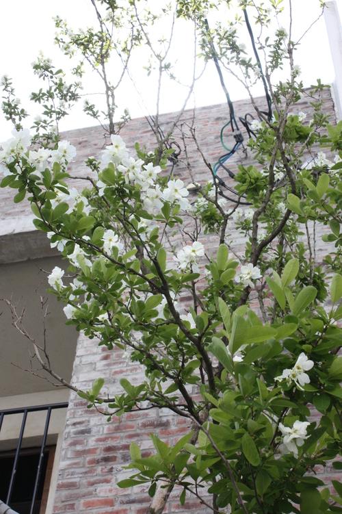 花と緑とともに_d0237564_14565288.jpg