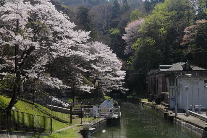 桜 2013 <京都 東山界隈> _f0021869_2341341.jpg