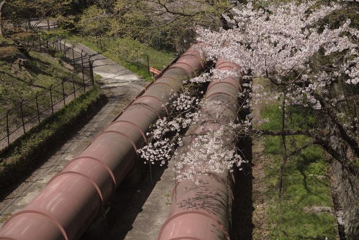 桜 2013 <京都 東山界隈> _f0021869_2342487.jpg