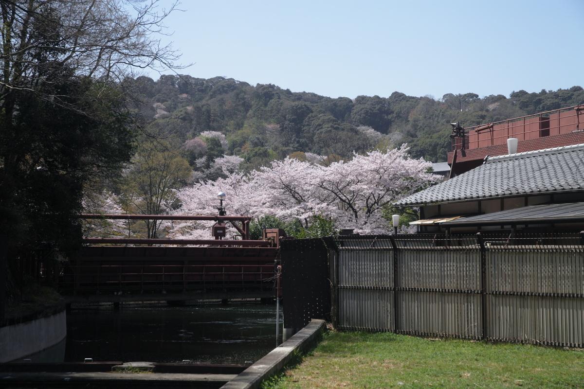 桜 2013 <京都 東山界隈> _f0021869_234476.jpg