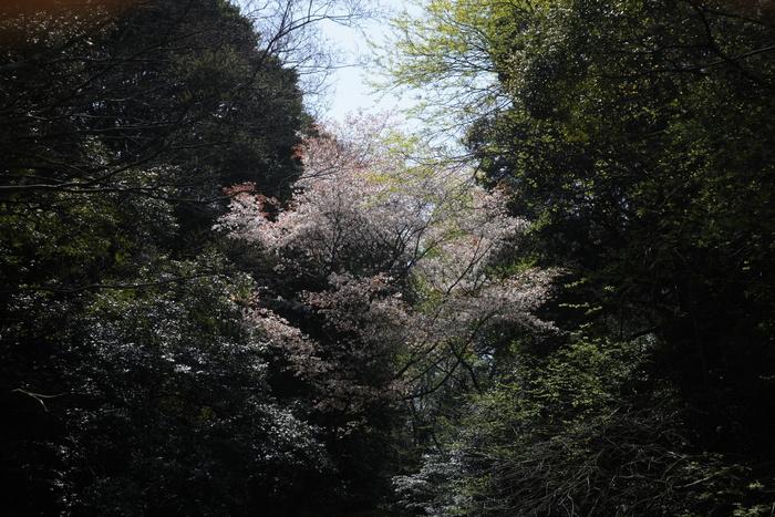 桜 2013 <京都 東山界隈> _f0021869_235121.jpg