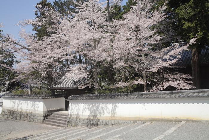 桜 2013 <京都 東山界隈> _f0021869_2355961.jpg