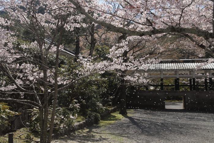 桜 2013 <京都 東山界隈> _f0021869_2361071.jpg